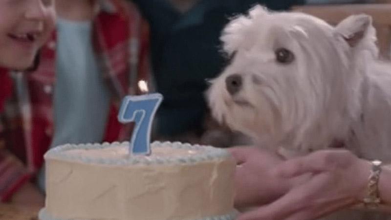 Banfield Pet Hospital 60-Second TV Spot